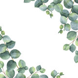 Watercolor green floral card with silver dollar eucalyptus leaves and branches isolated on white background. Royalty Free Stock Photos