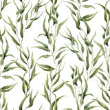 Watercolor green floral seamless pattern with eucalyptus leaves. Hand painted pattern with branches and leaves of Royalty Free Stock Photography