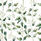 Watercolor green floral seamless pattern with flowering eucalyptus. Stock Images
