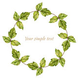 Watercolor green leaf maple  on white background, Decorative round frame, hand drawn wreath, botanical sketch Stock Photos
