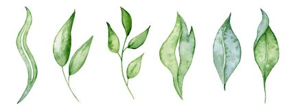 Watercolor green leaves and brunches Greenery herb hand rawn illustration royalty free stock photography