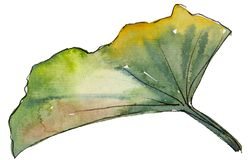 Watercolor green lotus leaf. Floral botanical flower. Isolated illustration element. Aquarelle wildflower for background, texture, wrapper pattern, frame or stock photos