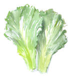 Watercolor green salad. For dishes Stock Photos