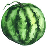 Watercolor green stripe circle watermelon fruit berry isolated vector Royalty Free Stock Photography