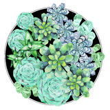 Watercolor green succulent Stock Image