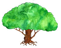Watercolor green tree Stock Images