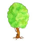 Watercolor green tree Royalty Free Stock Photo