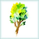 Watercolor green tree Stock Image