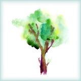 Watercolor green tree Stock Photo
