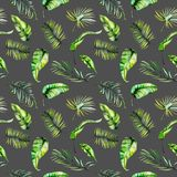 Watercolor green tropical exotic leaves and fern branches seamless pattern Royalty Free Stock Image