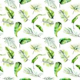 Watercolor green tropical exotic leaves and fern branches seamless pattern Stock Image