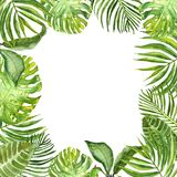 Watercolor green tropical leaves and plants border. Hand painted summer exotic greenery and foliage on white background. Watercolor square banner with fresh stock illustration