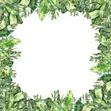 Watercolor greenery collection. Frame square backdrop vector illustration
