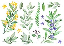 Watercolor greens collection.Texture with flowering branches, small flowers,leaves,fern leaves,foliage