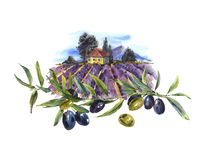 Watercolor greeting card with avender and olives Stock Photography