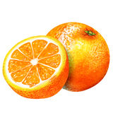 Watercolor group of oranges Royalty Free Stock Images