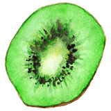 Watercolor half of exotic kiwifruit isolated vector Stock Photography