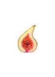 Watercolor half of figs, isolated on white background Stock Photography