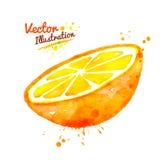 Watercolor half of an orange Stock Image