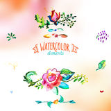 Watercolor hand drawing floral decor elements Stock Images
