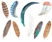 Watercolor hand drawn bird feather set isolited on white. Watercolor hand drawn bird feathers boho colorful set isolated on white backgroundn vector illustration