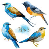 Watercolor hand drawn birds Stock Images