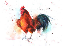 Watercolor hand-drawn bright-colored rooster Royalty Free Stock Images