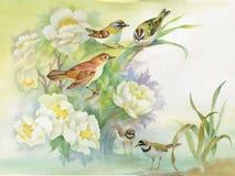 Watercolor hand drawn colorful beautiful flower and birds. Watercolor hand drawn colorful beautiful flower and birds Stock Photos