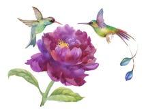 Watercolor hand drawn colorful beautiful flower and birds. Watercolor hand drawn colorful beautiful flower and birds Royalty Free Stock Photos