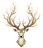 Watercolor hand drawn deer Stock Photo