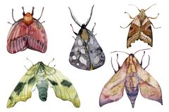 Watercolor hand drawn different exotic butterflies and moths set isolated on white background. Perfect for you unique