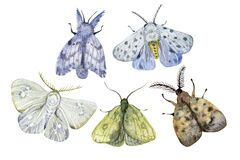 Watercolor hand drawn exotic butterflies and moths set isolated on white background. Perfect for you unique creation