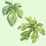 Watercolor hand drawn fig leaves. Beautiful vector image with watercolor hand drawn fig leaves Royalty Free Stock Photos