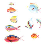 Watercolor hand drawn Royalty Free Stock Images