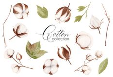 Watercolor hand drawn floral collection with white cotton flower, green leaves and brown branches.