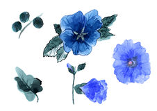 Watercolor hand drawn flowers and leaves of the mallow Stock Photography