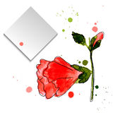 Watercolor hand drawn flowers and leaves of the mallow Royalty Free Stock Photography