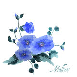 Watercolor hand drawn flowers and leaves of the mallow Stock Photo