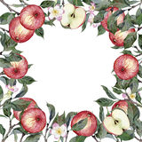 Watercolor hand drawn illustration of apples, branches and flowers Stock Image