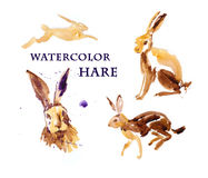 Watercolor hand drawn illustration of cute hare. Stock Photos