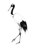 Watercolor hand drawn illustration isolated on white background stork flying in the sky. a newborn girl boy baby Stock Image