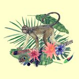 Watercolor hand drawn illustration with monkey, feathers, flowers. Watercolor vintage hand drawn illustration with monkey, feathers, flowers royalty free illustration