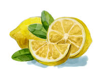 Watercolor hand drawn lemon Stock Photos