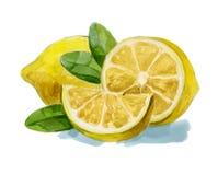 Watercolor hand drawn lemon vector illustration