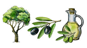 Watercolor hand drawn olive Stock Photos