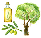 Watercolor hand drawn olive Royalty Free Stock Image