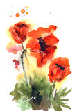 Watercolor hand drawn orange poppies on white background. Floral birthday card royalty free illustration