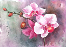 Watercolor hand-drawn orchid flowers Royalty Free Stock Images