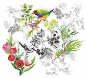 Watercolor hand drawn pattern with tropical summer flowers of and exotic birds Stock Photo