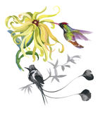 Watercolor hand drawn pattern with tropical summer flowers of and exotic birds Stock Photography